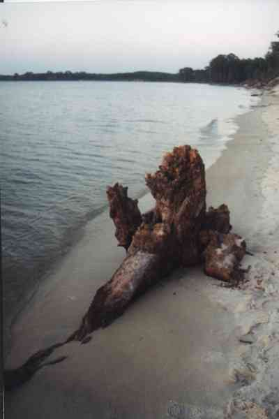 Gulf-Islands-National-Seashore:-Butcherpin-Cove_driftwood-3.jpg:  driftwood, beach, sand, sunset
