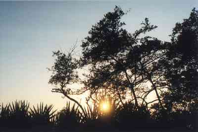 Gulf-Islands-National-Seashore:-Butcherpin-Cove_park-1.jpg:  palmetto, oak, sunset, gulf coast, gulf of mexico, naval live oaks reservation