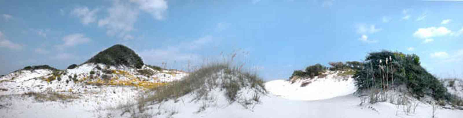 Gulf-Islands-National-Seashore:-Dunes:-Parking-Lot-9_01.jpg:  dunes, sea oats, oak trees, wind blown, wildflowers, scudding clouds, weather front, sand dunes, ground cover, white sand, crystal sand,