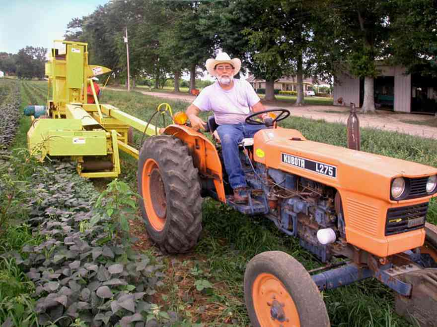 Hollandtown:-Holland-Farm:-Butterbean-Harvest_02.jpg:  farm produce, farmland, harvest, sheller, santa rosa county, truck farm,