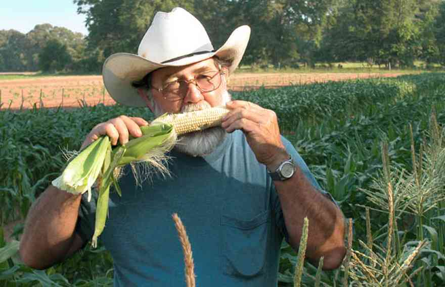 Hollandtown:-Holland-Farm:-Corn-Harvest_00a.jpg:  corn cob, cowboy hat, corn silk, farmer, corn patch, silver king corn