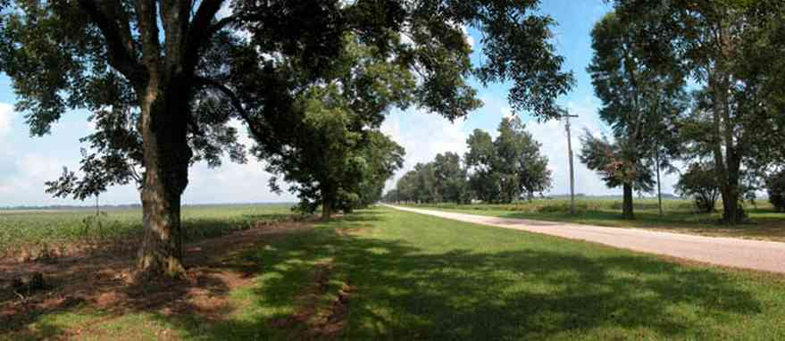 Jay:-Pine-Level-Church-Road_02.jpg:  pecan tree, cotton field, country road, two-lane road