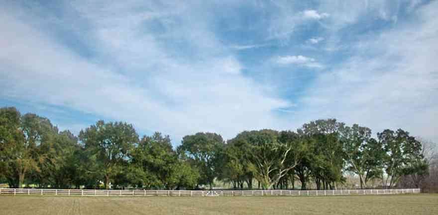 Lillian:-Lost-Bay-Horse-Farm_02a.jpg:  oak trees, farm, horse farm, farmland, board fence, horses