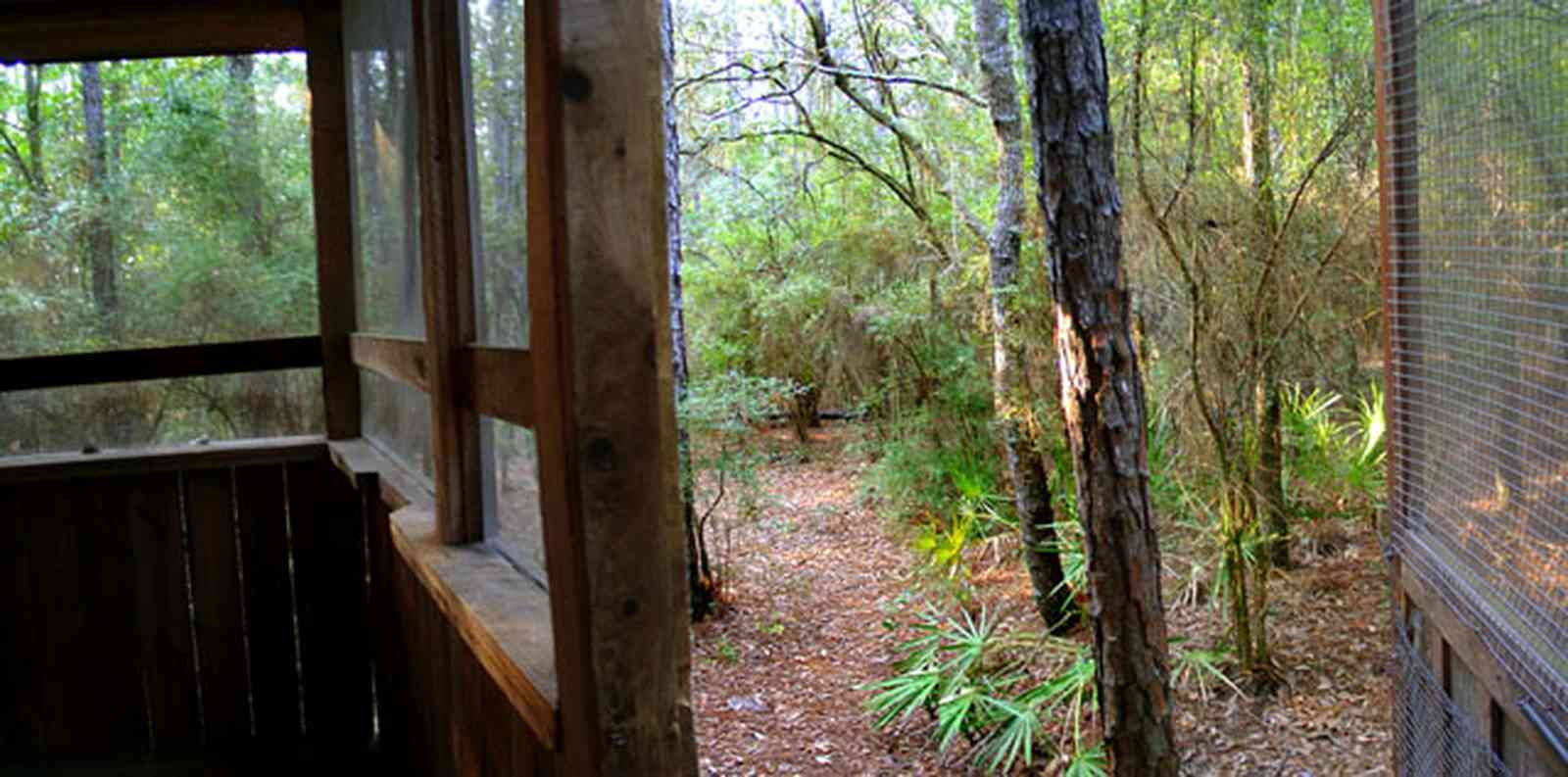 Milton:-Adventures-Unlimited_11.jpg:  screen porch, palmetto palm, forest, cabin, bunkhouse