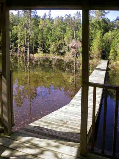 Milton:-Pond-Creek_03.jpg:  plant preserve, deck, pier, gazebo, swamp, marsh, pine trees, cypress trees, white cedar tree, pond