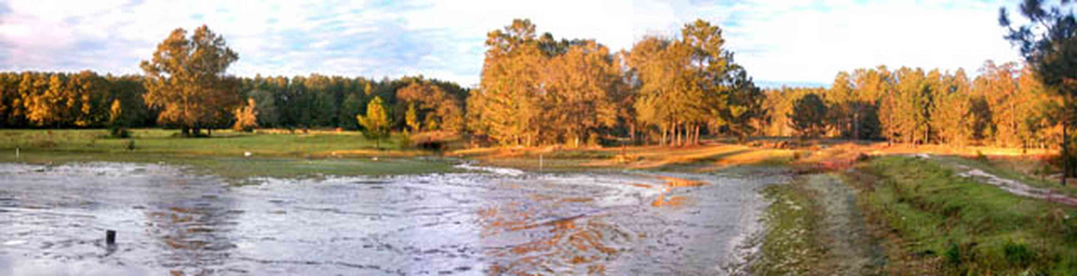 Milton:-Stewart-Farm_01.jpg:  fish farm, pond, levee, oak trees, lake, catfish pond, shrimp pond, prawns