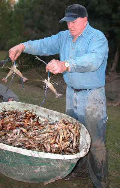 Milton:-Stewart-Farm_02.jpg:  shrimp, prawns, pond, fish farm, wheelbarrow