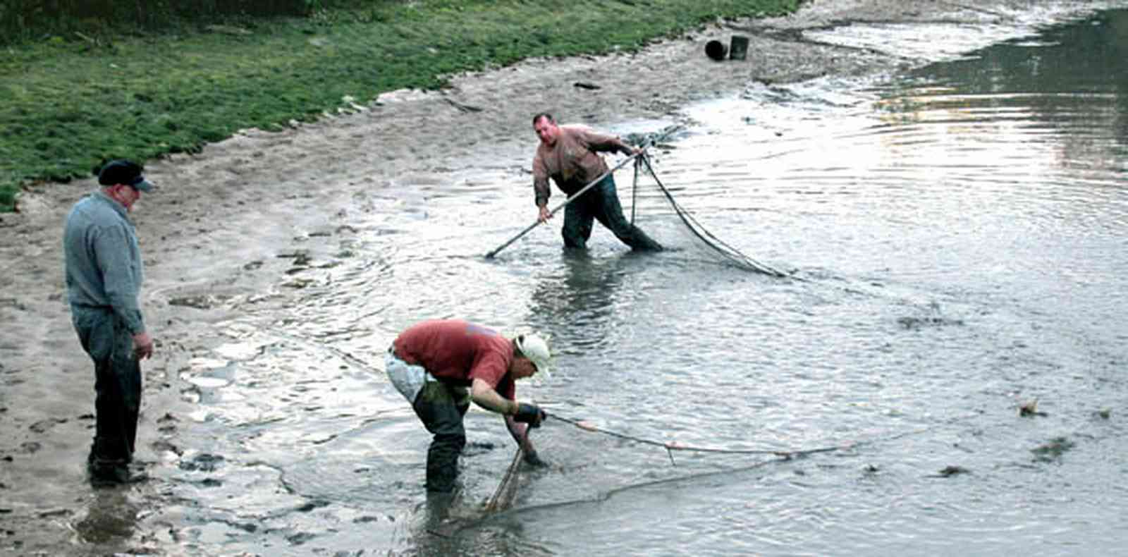 Milton:-Stewart-Farm_05a.jpg:  cast net, fish farm, shrimp, prawns, lake, pond