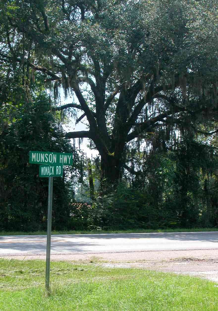 Milton:-Womack-Road_01.jpg:  oak tree, spanish moss, country road, two-lane road, farmland, back country