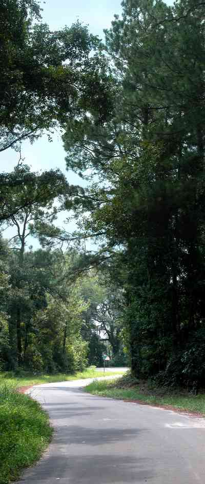 Milton:-Womack-Road_01b.jpg:  oak trees, pine trees, two-lane road, country road, oak tree