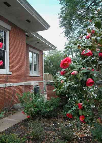 North-Hill:-116-DeSoto-St_03.jpg:  camellia bush, red brick house, spanish revival style, eaves, overhang,
