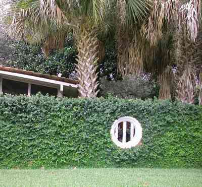 North-Hill:-123-West-Lloyd-Street_31.jpg:  window, vine covered wall, palm trees, screen porch
