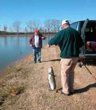 Oak-Grove:-Carpenters-Catfish-Farm_04.jpg:  mayor barnes, catfish, rod and reel, catfish farm, catfish pond