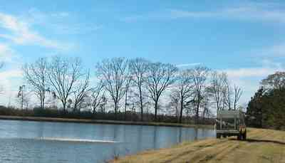 Oak-Grove:-Carpenters-Catfish-Farm_15.jpg:  catfish, pond, farm , ,