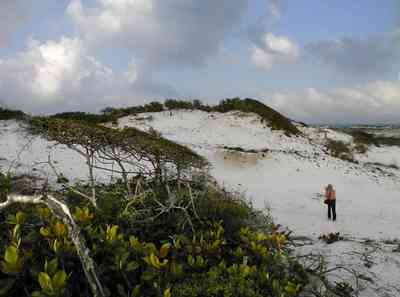 Pensacola-Beach:-Dunes_10.jpg:  santa rosa island, gulf of mexico, gulf islands national seashore, escambia county, cumulus clouds, beach, sand dunes, emerald coast, ,