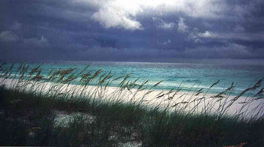 Pensacola-Beach:-Waterfront_13.jpg:  sea oats, dunes, beach, seashore, cumulus clouds, gulf of mexico, dune, quartz crystal sand,
