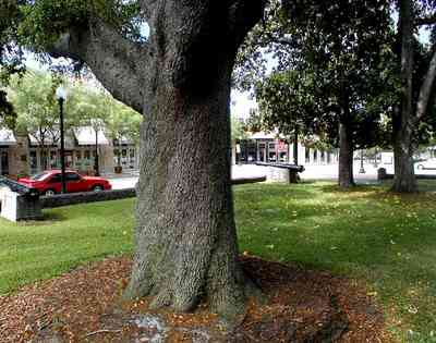 Pensacola:-Palafox-Historic-District:-Ferdinand-Plaza_07.jpg:  town square, plaza, obelisk, stone wall, oak trees, magnolia trees, historic district, courthouse, jackson's restaurant, empire building