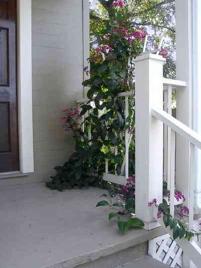 Pensacola:-Seville-Historic-District:-311-East-Intendencia-Street_02.jpg:  gulf coat cottage, trellis, flowering vine