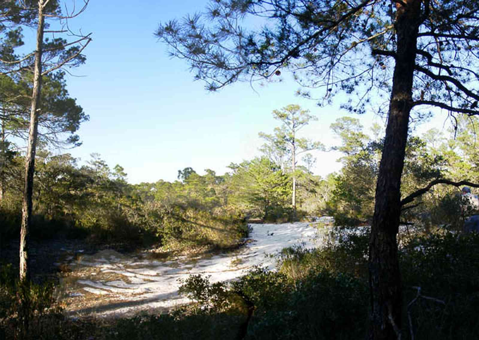 Perdido-Key:-Pine-Barrens_00c.jpg:  sand scrub pine forest, sand dunes, key, peninsula, short-leaf pine trees, xeric sandy forest