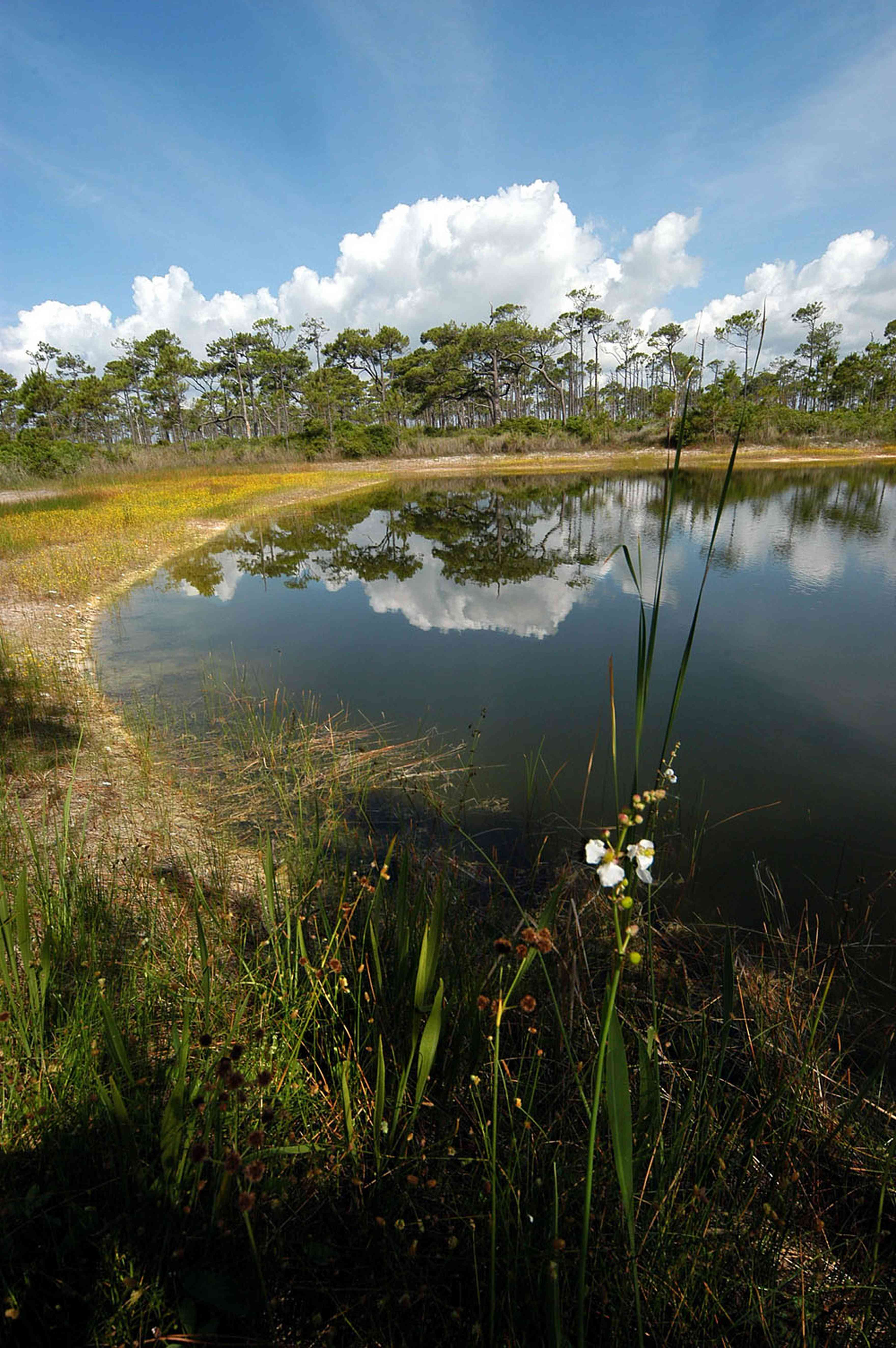 lake_01+WEB.jpg:  brackish, sand pine, barrier island, scrub, lake, turtle grass, shoal grass,