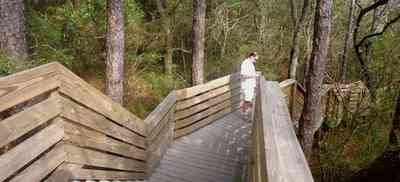 Scenic-Highway:-Bay-Bluffs-Park_01.jpg:  deck, stairs, pine trees