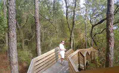 Scenic-Highway:-Bay-Bluffs-Park_02.jpg:  walkway, deck, pine trees, tom roush