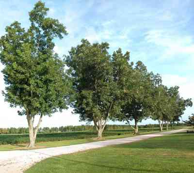 Walnut-Hill:-4821-Morgan-Road_01.jpg:  pecan trees, country road, cotton field, farmer, cultivation