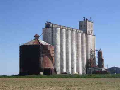 Walnut-Hill:-Kansas-Road-Wheat_09.jpg:  wheat, farm, farms, walnut hill,grains, rural, mennonite, grain elevator,