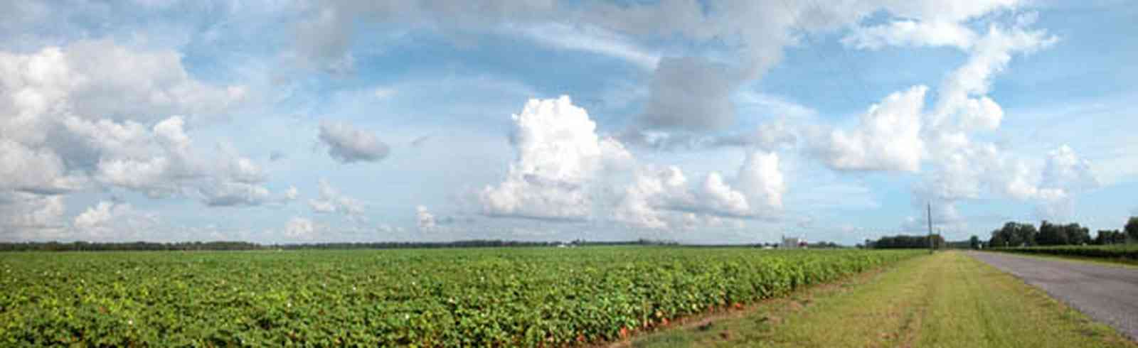 Walnut-Hill:-Kansas-Road_04.jpg:  cotton field, planting, soil, farmer, farmland, boil weavil, country road, silo, cumulus cloud,