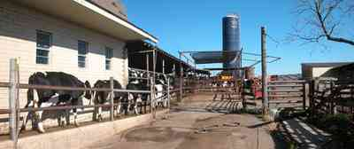 Walnut-Hill:-VanPelt-Farm_08.jpg:  dairy farm, heifer barn, milking barn, corral, fence, holstein cows, silo, farmer, farmland