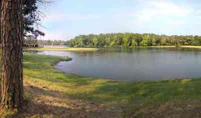 Walnut-Hill:-Wiggins-Lake_02.jpg:  pine tree, lake, spillway, grove of trees, martin houses