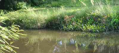 Warrington:-Maggies-Ditch_02.jpg:  creek, pond, wildlife refugee
